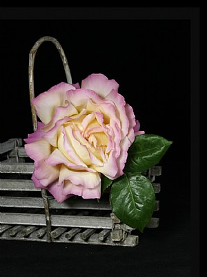 Rose in Wooden Basket