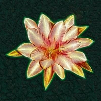 Epiphyllium, Painted
