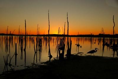 Sunrise with Heron
