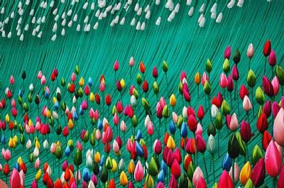 vibrant lotuses