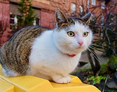 The Brave cat