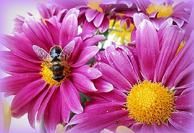 busy bee....