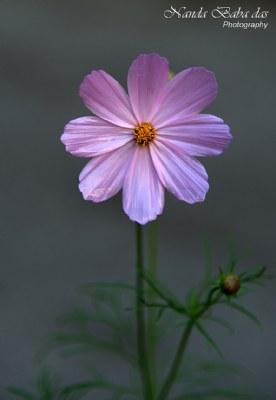 Flower - 101