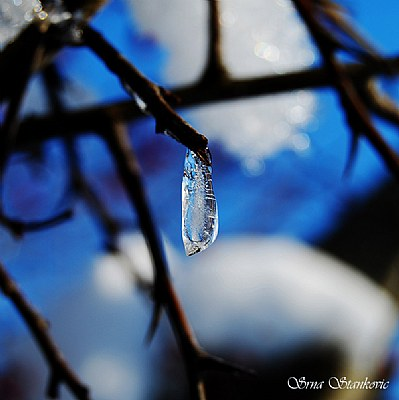 December's Beauty