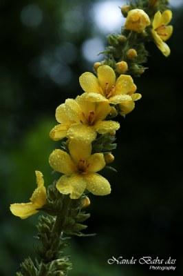 Wild Flower - 002