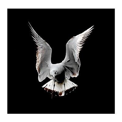 **On Wing   III**