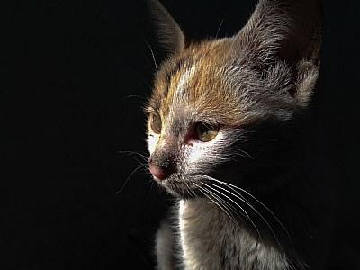 **cat**