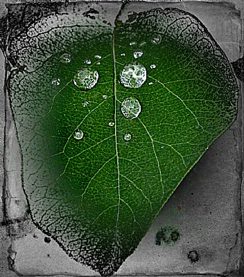 Lightning in a leaf