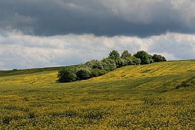 pilguj's field