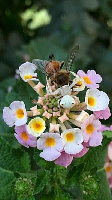 spider & bee