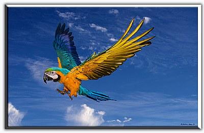 landing parrot