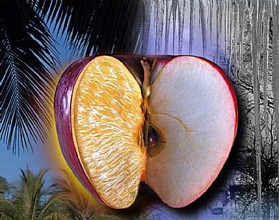 Canadian Caribbean apple