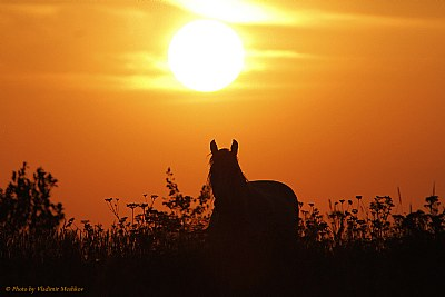 Sunset with Horse.