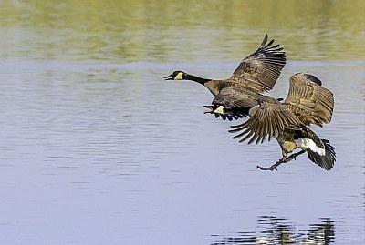 Nature landing