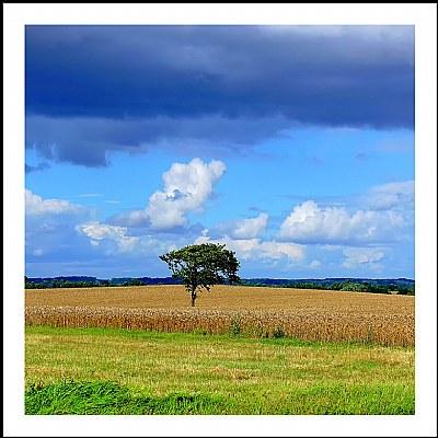 *** A Simple Tree ***