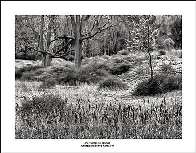 Southfields Spring