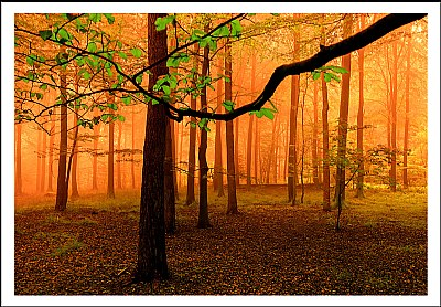 ***Early Morning Fog***