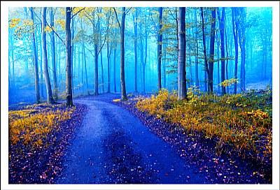 *Early Morning Fog II*
