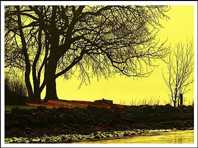 Tree Of .......