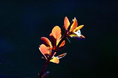 Fluorescent
