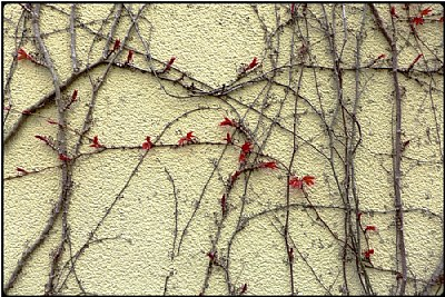 sprouting wall