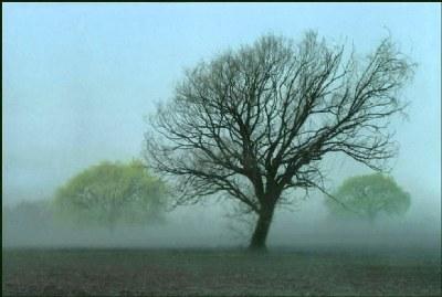 Dead Willow