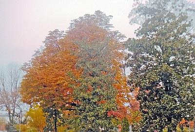 Dfferent Trees