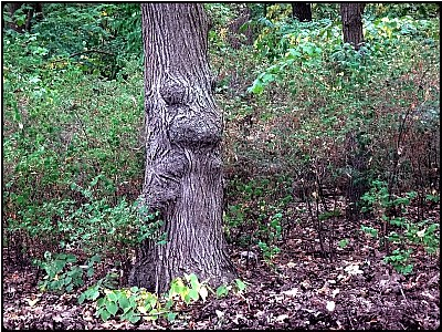 the gnome-tree