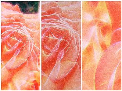 Variations of a flower