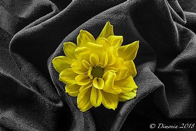 Oggi mi vesto di giallo