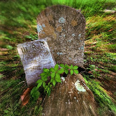 WRP The grave