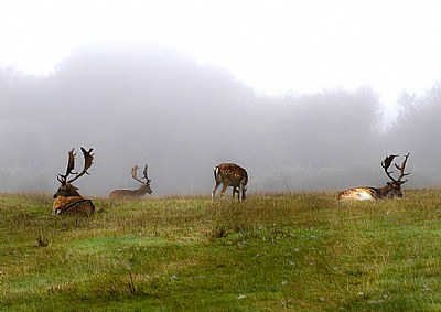 Heavy misty morning