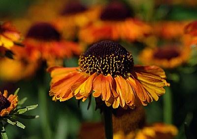 Floral DOF/POF