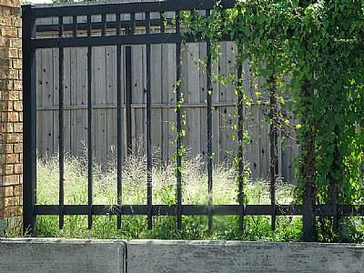Fence & Vine