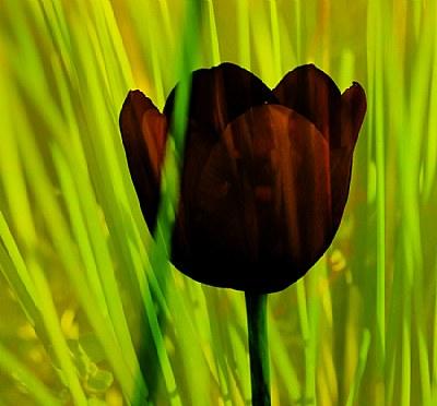 Line Green Tulip
