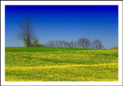 **Spring Time**