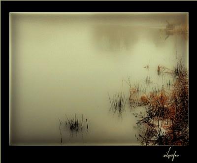 Silence Visible