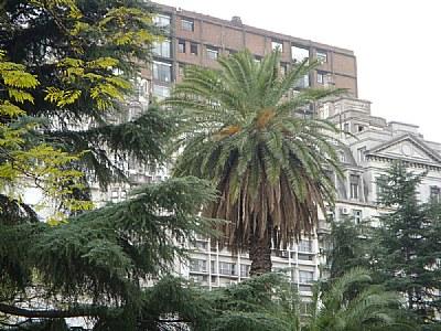 Trees & City
