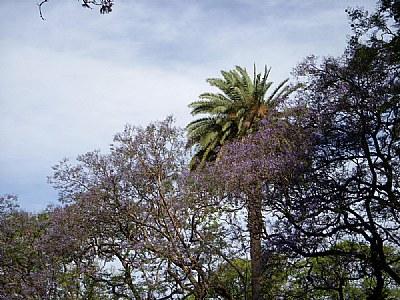 Trees & Blue