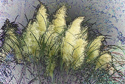 Pampas Grass layers