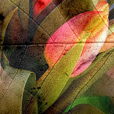 Folded Leaf
