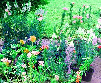 Flowers & Colour
