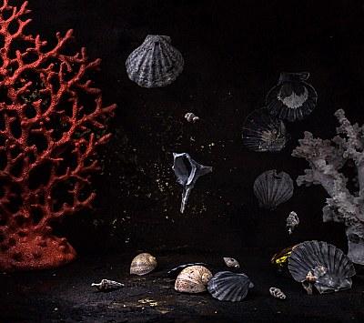 night sea tale