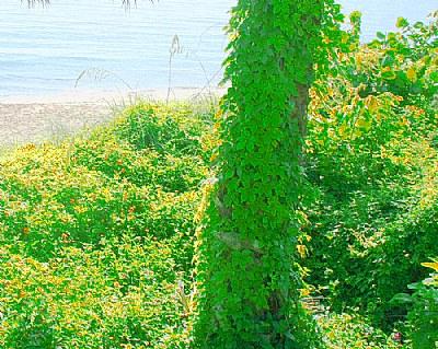 Green &  Sea