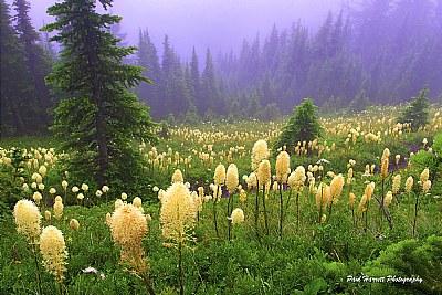 Bear Grass Country