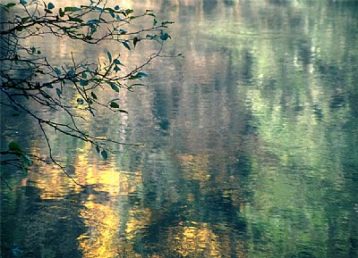 Delicate Reflections