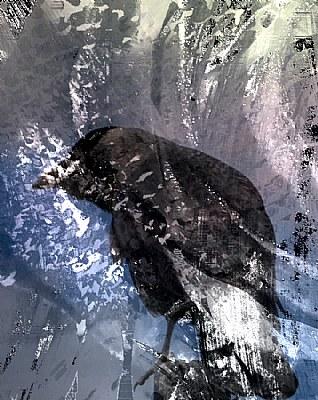 Snow Corvus