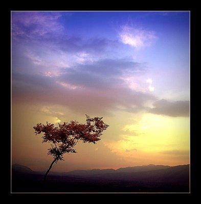 The Tree (l)