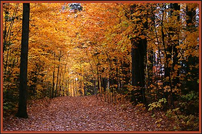 Fall tapestry
